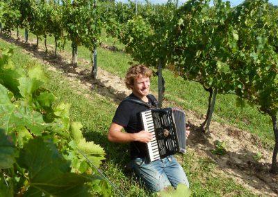 Rémi accompagne les vendanges avec son accordéon