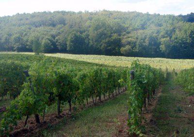 38 ha cultivés en agriculture biologique