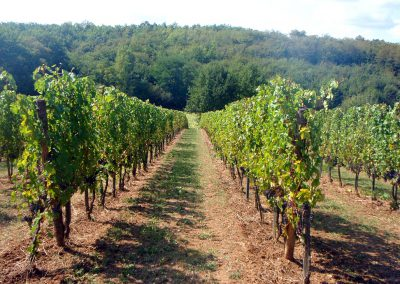Domaine-Maillac-img-vigne-rang